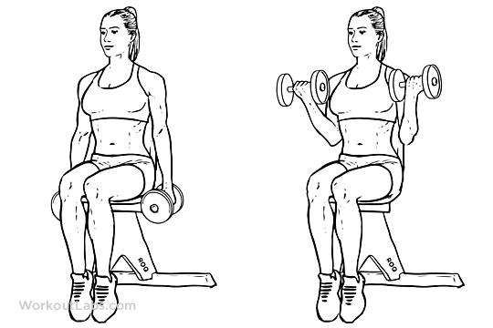 Seated_Dumbbell_Curl1.png
